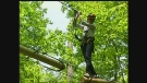 CTV's Cara Campbell tries out the new Treetop Adventure Park at Boler Mountain in London, Ont. on Tuesday, May 21, 2013.