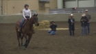 CTV London: All Equine Show at Western Fair