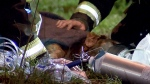 Family dog saved by Vancouver firefighters