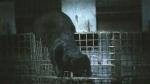 CTV Kitchener: Mink mayhem