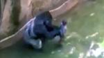 Gorilla shot dead after boy falls into zoo enclosu