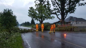 London firefighters help to remove a fallen tree branch on Woodhull Road on Monday, July 25, 2016. (Justin Zadorsky / CTV London)