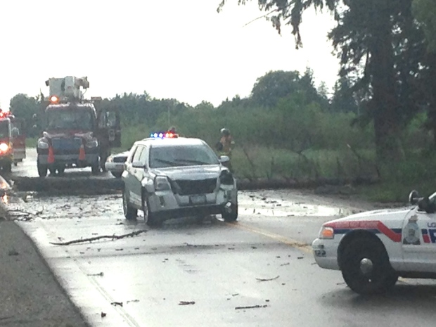 A tree struck an SUV on Dingman Drive in London, Ont. on Thursday, July 28, 2016.  (Daryl Newcombe / CTV London)