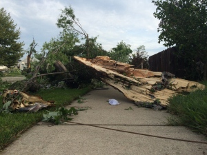 The aftermath of a tornado hitting Riberdy Road in Windsor, Ont., on Thursday, Aug., 25, 2016. (Michelle Maluske / CTV Windsor)