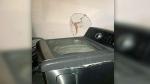 CTV News Channel: 'Exploding' Samsung washing mach