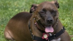CTV Ottawa: National Pit Bull Awareness Day