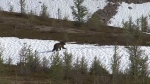 Alberta Parks has issued a bear warning in the Springbank area after a mother grizzly and her cubs were spotted near a park. (File)