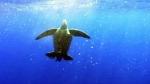 Edge of extinction? Global wildlife population dec